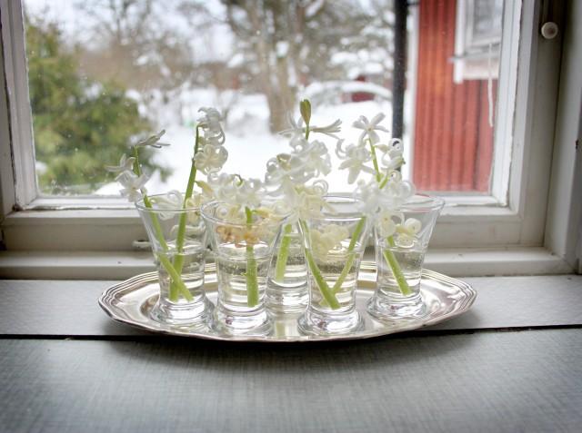hyacintsnaps